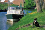 animals,boats,cats,leisure,mammals,motorboats,nature,Photographs,riverbanks,rivers,sports,transportation